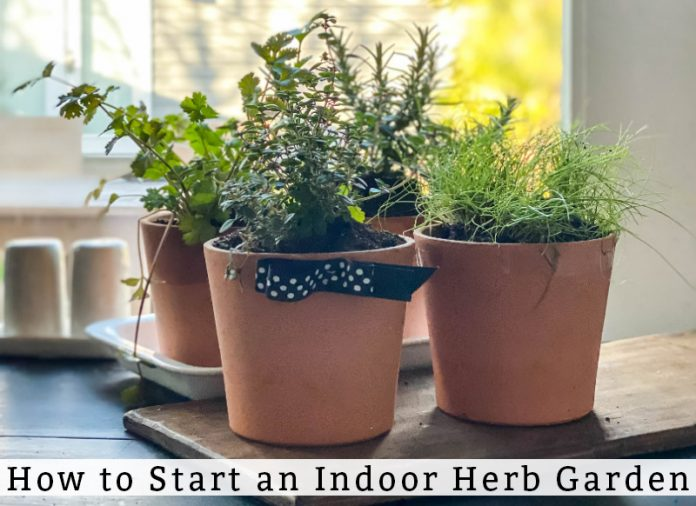 How to Start an Indoor herb Garden is at the bottom in black text over a white overlay. Behind it are three potted herb plants in terra cotta colored pots.
