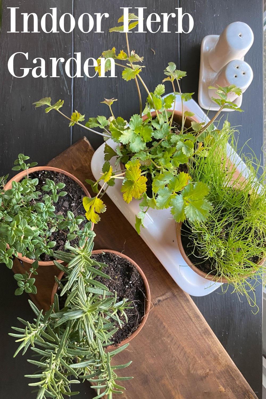 Indoor Herb Garden in the top left corner overlayed over an overhead shot of herbs in potted plants.